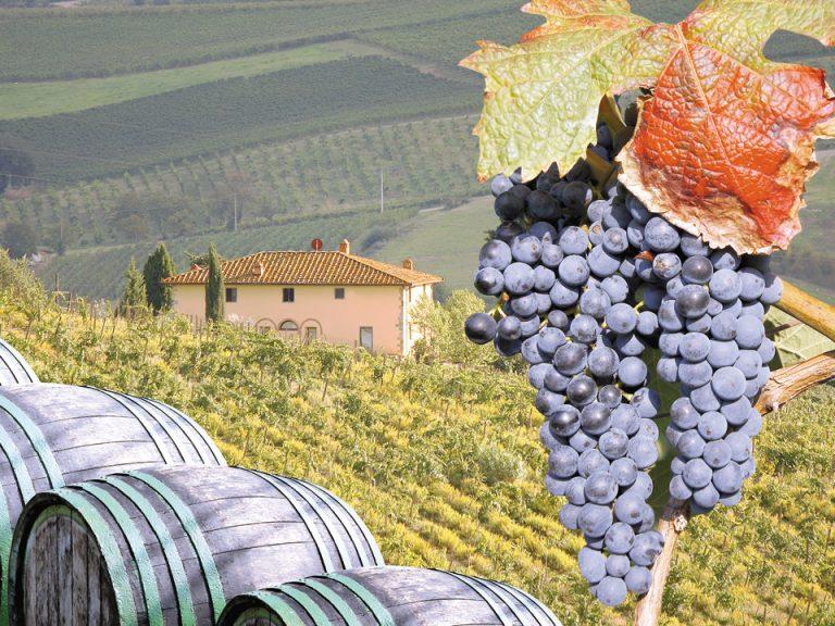 Ajutoare substanțiale pentru viticultori