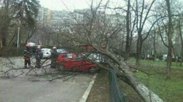 Copac prăbuşit peste o maşină în mers. Femeia de la volan a fost resuscitată