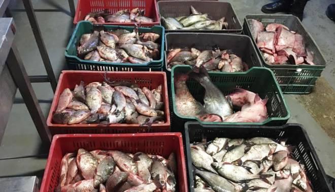 Hoţi prinşi cu un sfert de tonă de peşte