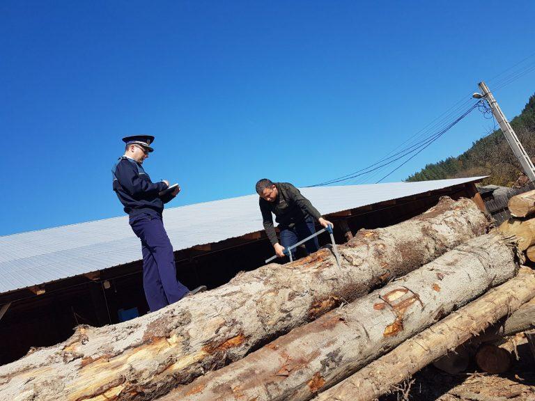 Afacere ilegală cu lemne descoperită la Dângeni