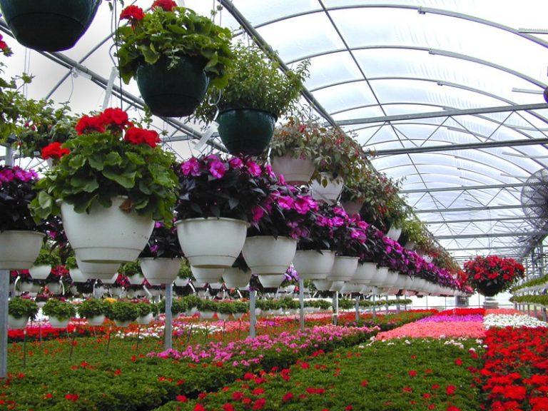 Cea mai profitabilă afacere cu flori în sere sau solarii