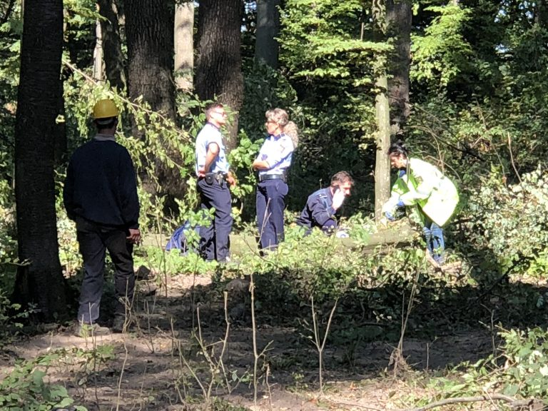 Moarte cumplită într-o pădure din judeţ (video)