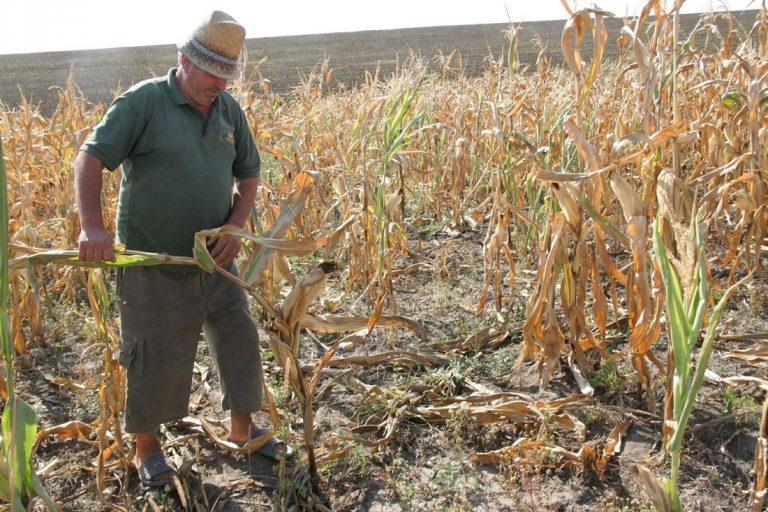 Descoperiți în fața secetei (video)