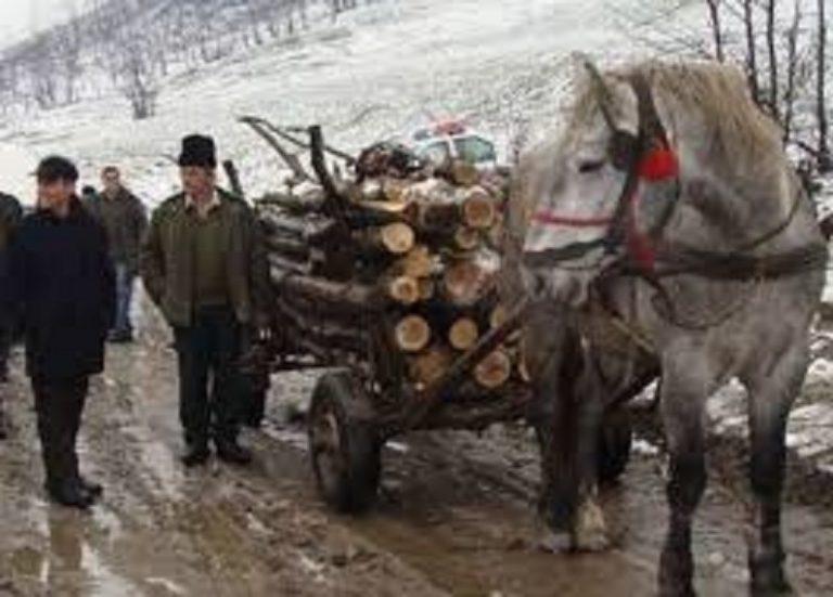 Bărbați acuzați de furt, după o afacere cu lemne