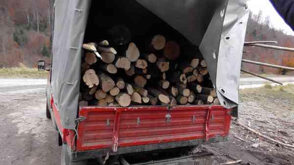 Guvernul a aprobat intrarea în vigoare a sistemului de urmărire a materialului lemnos