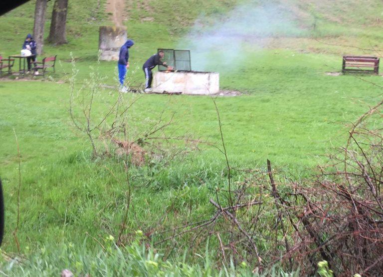Interzis la iarbă verde din cauza pestei porcine