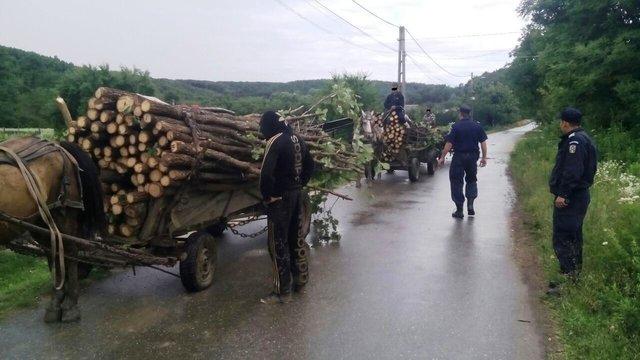 Hoţi de lemne prinşi de jandarmi în flagrant