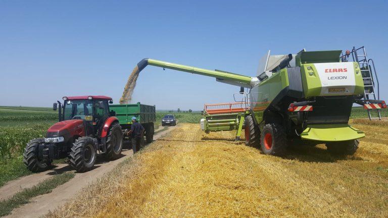 Producţie de grâu peste media pe ţară obţinută la Botoşani