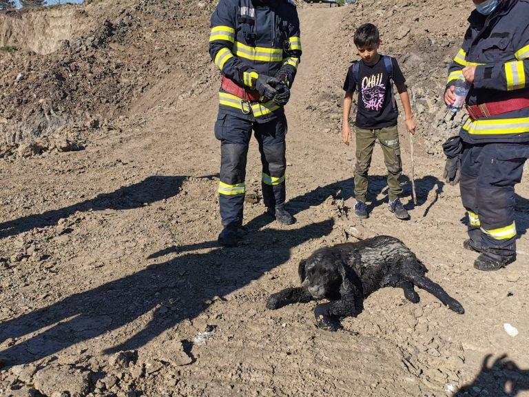 Câine salvat de pompieri, în apropierea municipiului Dorohoi