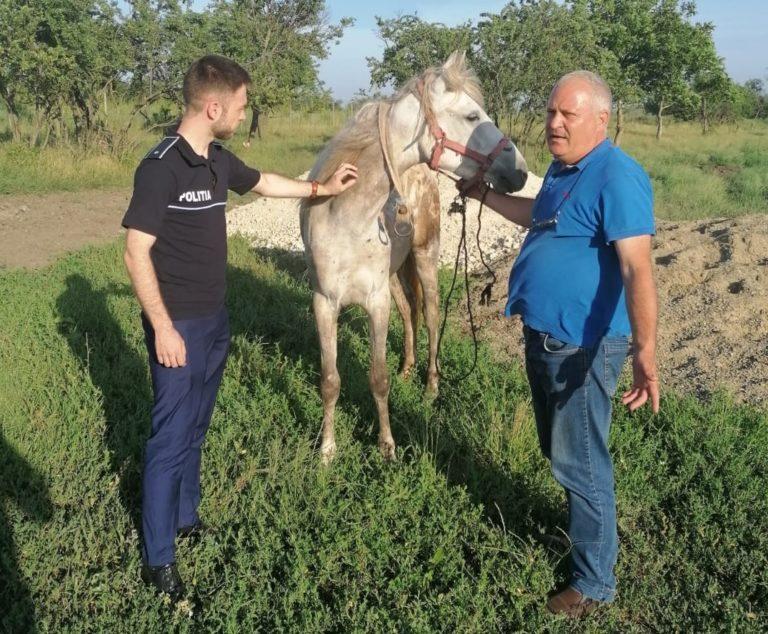 Cal subnutrit și bătut, salvat de polițiștii de la Protecția Animalelor