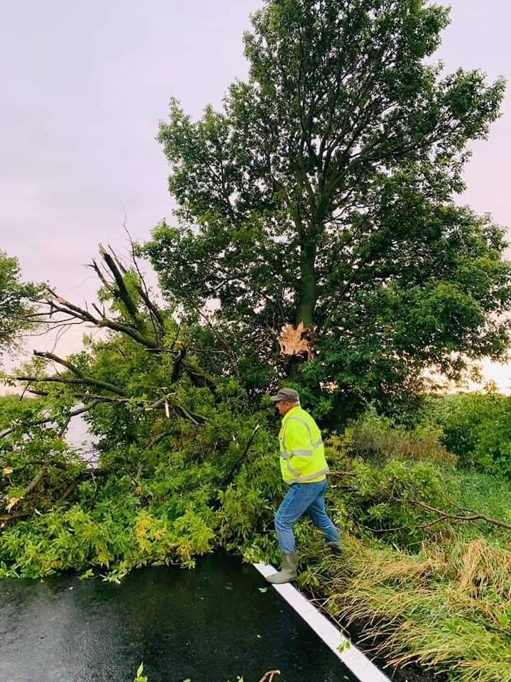 Copaci doborâţi de rafale de peste 100 km/h pe un drum naţional (video)