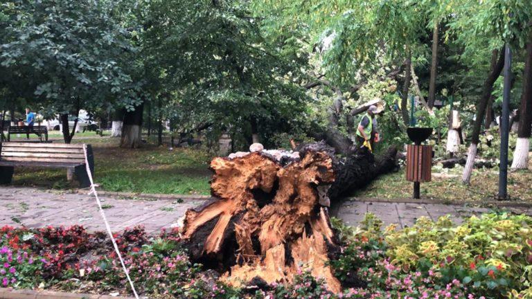 Copac smuls din rădăcini, prăbușit peste un loc de joacă (video)