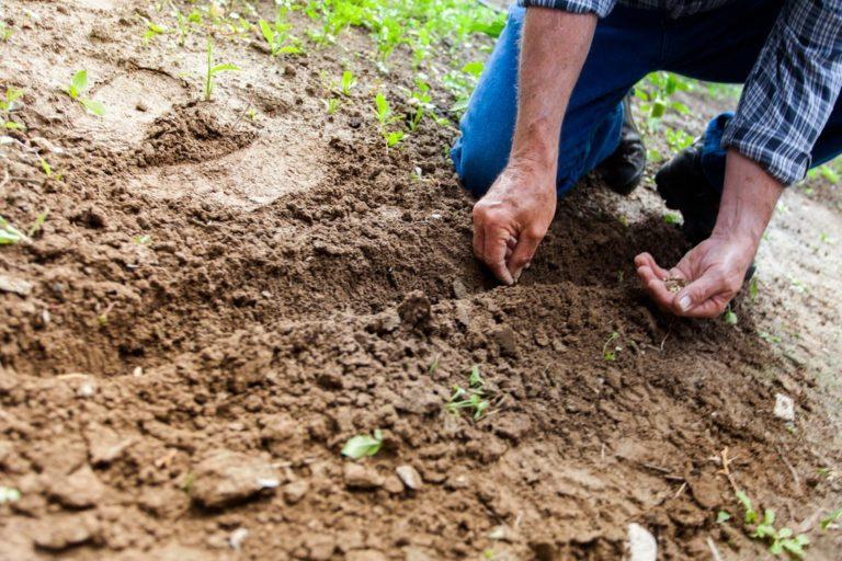 Păreri despre GrădinaMax sau cum găsești semințe și răsaduri de calitate