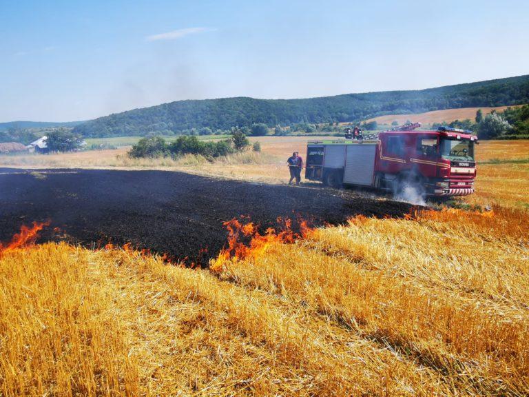 Câmp cuprins de flăcări. Au intervenit pompierii
