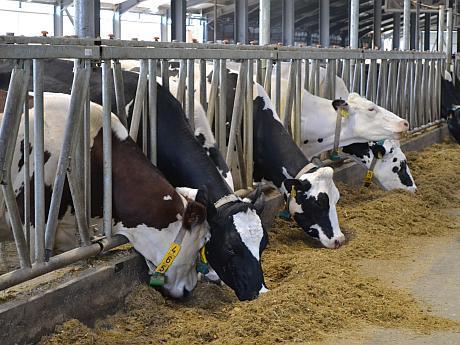 Ultima zi în care crescătorii de bovine pot depune cereri la APIA pentru subvenții