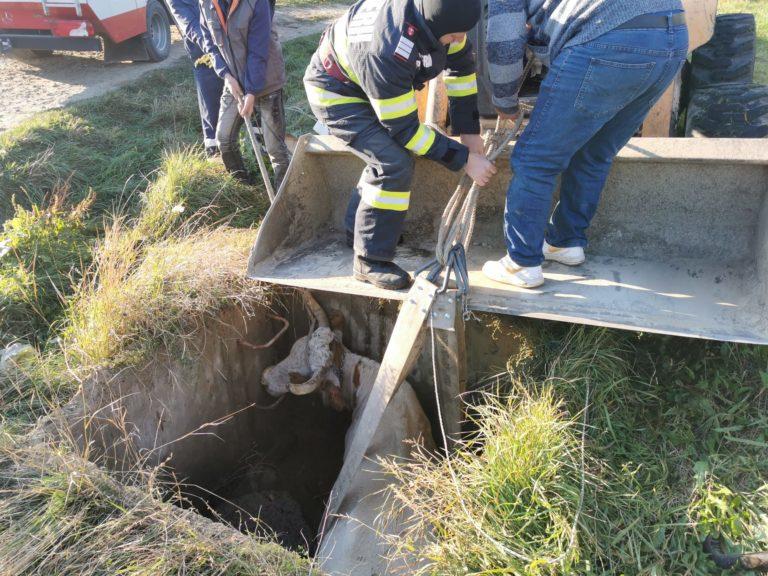 Intervenție neobișnuită a pompierilor din Trușești